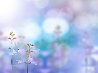 Beautiful light purple flowers blurred background