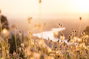 Summer grass flower background.selective focus.