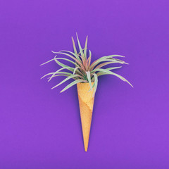cactus or palm in waffle cone on ultra violet background. ice cream concept. minimalism. flat lay, top view