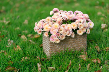 Basket with autumn flowers