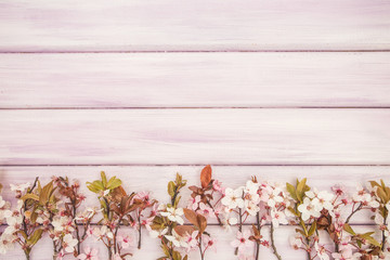 Spring pink/purple wooden background with blossom