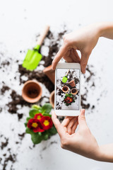 Planting seedlings composition. Female hands holding a smartphone.