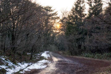 saryeoni forest trail in winter