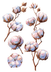 Watercolor hand-drawn illustration of cotton plant on white background (isolated)