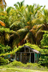 An old hut in the palm forest.