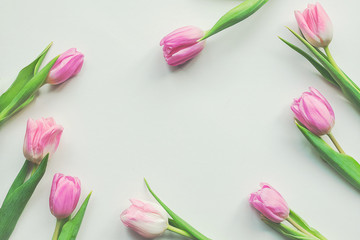 Top view of first spring pink tulips on white background with copy space. Beautiful spring background for International Womens day, Mother's day, March 8, Valentines day