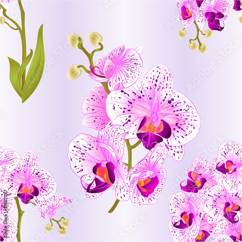 Seamless texture branches orchid phalaenopsis purple and white seamless texture branches orchid phalaenopsis purple and white flowers and leaves tropical plants stem and buds mightylinksfo