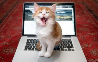 Happy kitten sitting on laptop keyboard