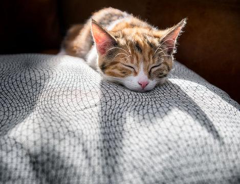 Backlit kitten sleeping on a luxurious cushion