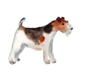 Watercolor fox terrier