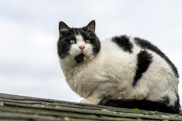 Schöne Katze sitzt auf einem Dach