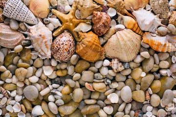 Seashells and pebbles background, natural seashore stones