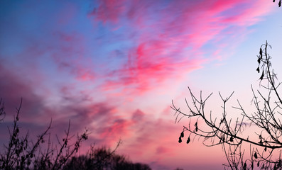 Red clouds at sunset through branches on a blue sky