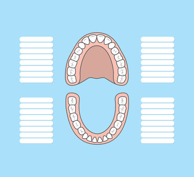 Tooth chart blank illustration vector on blue background. Dental concept.
