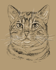Bengal Сat on brown background