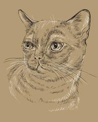 Burmese Cat on brown background
