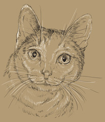 Cat white and grey color in brown background