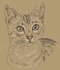 Egyptian Mau Cat in brown background