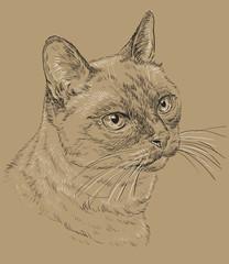 Thai Cat on brown background