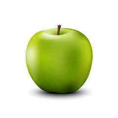 Green apple realistic detailed. Vector.