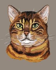 Colorful Bengal Cat