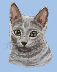 Colorful Russian Blue Cat