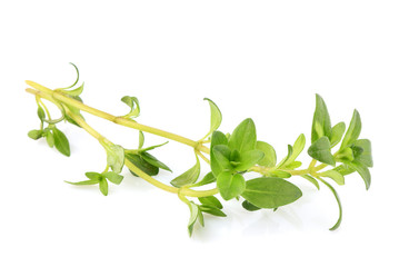 Thyme fresh herb young isolated.