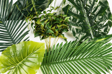 Tropical Leaves Background isolated on white, top view