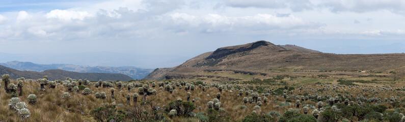 Páramo de Ocetá, Cordillère des Andes, Colombie