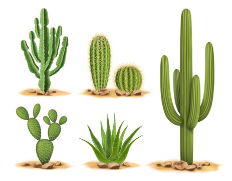 Cactus plants set of desert among sand and rocks. Realistic vector illustration isolated on white background