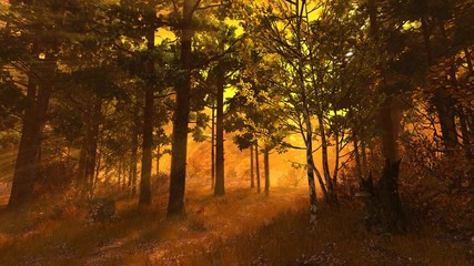 Autumn forest 004