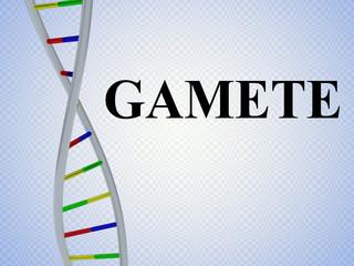 GAMETE - genetic concept