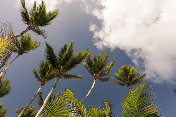 Palm trees over blue sky and cloud