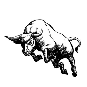 freehand sketch illustration of charging bull