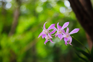 pink Orchid flowers on green natural background