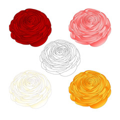 Red, Pink, White, Yellow Ranunculus Flower and outline.