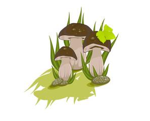 Three edible mushrooms on white background/Three colorful animated boletus on the white background
