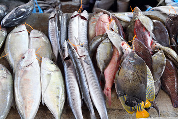 Various fish on fish market in Victoria, Mahe Island, Seychelles