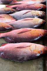 Red snappers on fish market in Victoria, Mahe Island, Seychelles