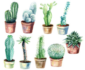 Cactus isolated on white background. Watercolor hand drawn set illustration.