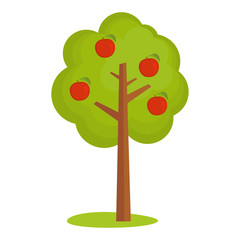 Apple tree vector illustration isolated
