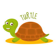 Turtle Vector illustration isolated