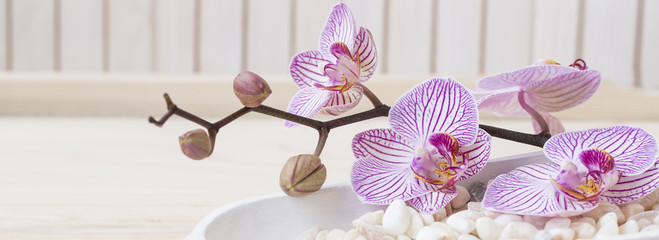 Tuinposter Orchidee Spa setting still life with orchid