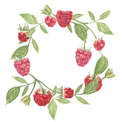Hand drawn watercolor wreath of flowers of raspberry on white background. Botanical illustration.