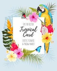 Vector card with macaw and flowers