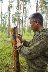 Forest inspectors work in the forest.
