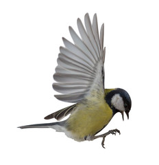 photo of great tit in flight