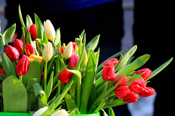 Fresh tulips at a street market