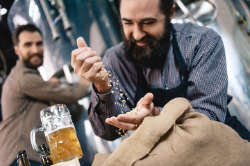 Joyful bearded brewer sifts through hand wheat for brewing in craft of craft brewery.