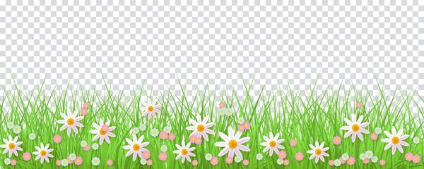 Spring border with green grass and flowers on transparent background - greeting card decoration element for Easter congratulation or poster. Cartoon vector illustration. Wall mural